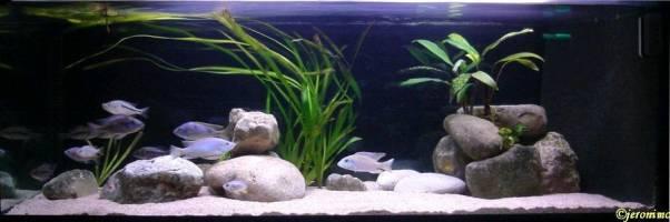 déco aquarium pierre